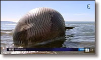 Picture of whale