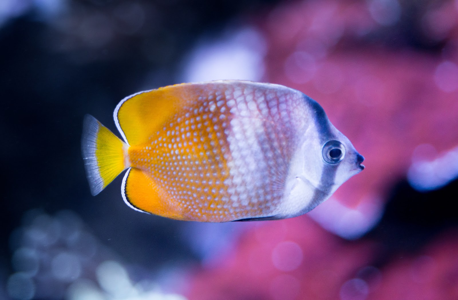 white-and-yellow-fish-close-up-photography-images