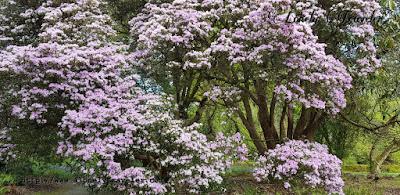 Kilmacurragh Botanic Gardens