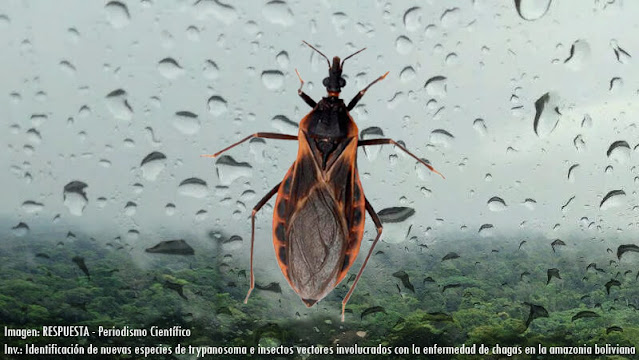 Trypanosoma chagas en la amazonía
