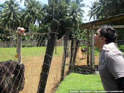 camiguin,ostrich,farm,philippine travel,philippine mapping,schadow1 expeditions,backpacking