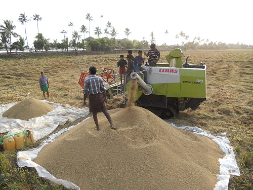 Paddy Procurement to start from Oct 11, 2021 in Punjab & Haryana as of now