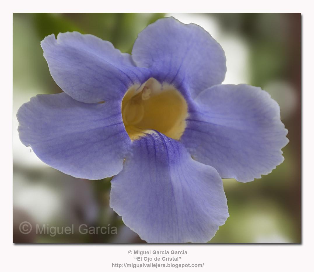 Flores. ¿Orquídea?.