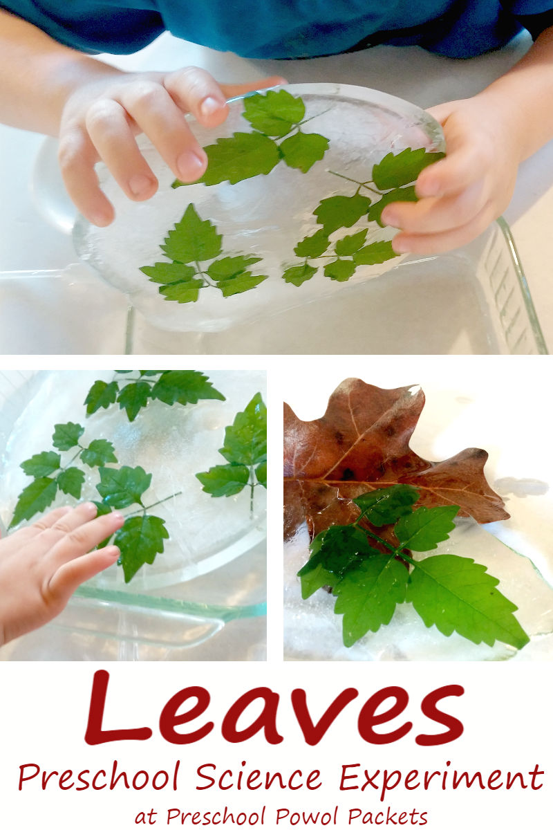 Preschool Leaf Science Experiment | Preschool Powol Packets
