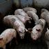 """DE NO CREER: Detectan cepa de gripe con """"potencial pandémico"""" en China"""