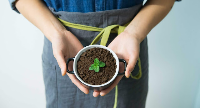 Person Holding Cup With Green Plant