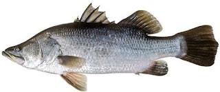 Nama Nama Ikan Laut Nama Latinnya Dan Keterangannya Beserta Gambarnya Dodi Rullyanda