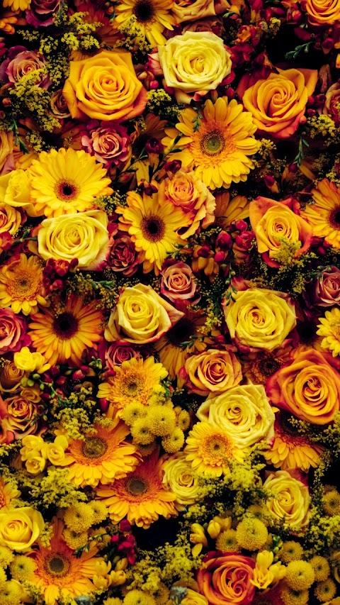 Luống hoa vàng đẹp