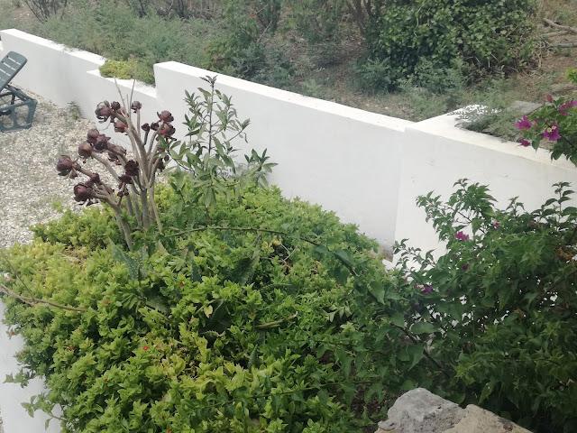 biały murek ogrodowy