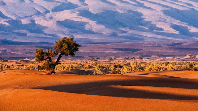 Árvores do deserto no Sahara em Marrocos