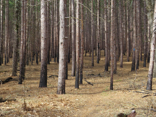 effects of fire on the North Country Trail