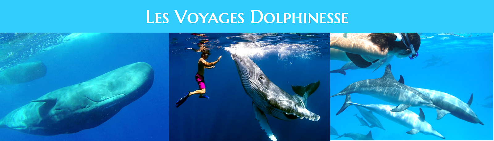 http://www.dolphinesse.net/p/voyages-dolphinesse.html