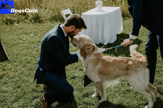 Adorable bridecake Features Beloved Dog Making a Playful Mess