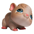 Littlest Pet Shop Singles Guinea Pig (#288) Pet