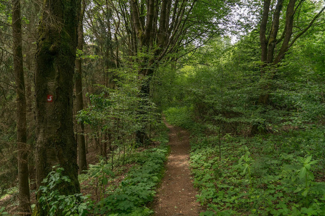 Talsperrenweg Siegburg | Wahnbachtalsperre | Erlebnisweg Sieg | Naturregion Sieg 13