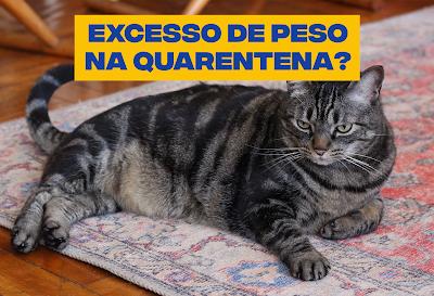 Atenção, humano! A quarentena também pode causar excesso de peso nos gatos.