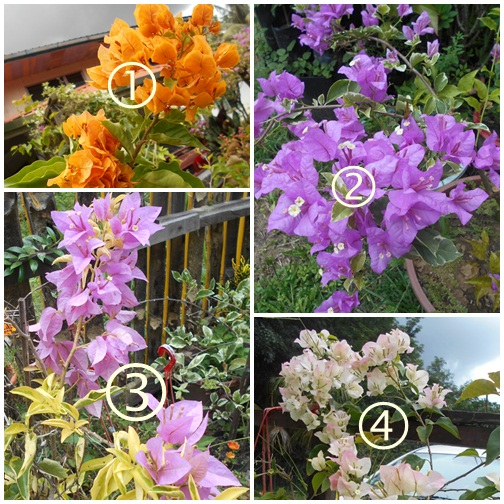 12 Koleksi Bunga Kertas Di Laman Etuza