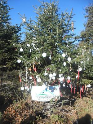 OLYMPUS ACTIVITIES : Χριστουγεννιάτικη εξόρμηση!