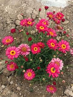 çiçek sevgisi deneme yazısı