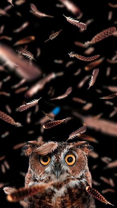 Baykuş Telefon Duvar Kağıtları - Owl Phone Wallpapers 18+