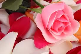 http://1.bp.blogspot.com/-MdNRbj3jtFk/Ukmg-ia7EsI/AAAAAAAAAJ0/k-qDy1-afGc/s320/images+(33).jpg