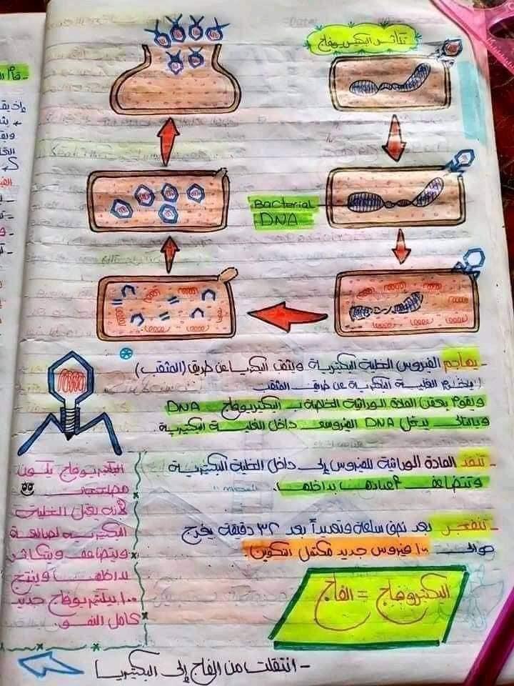 اقوي ملخص DNA تالته ثانوي 3
