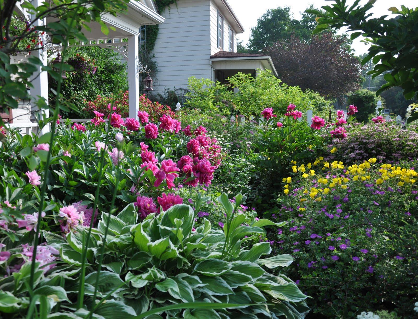 Three Dogs in a Garden: MY GARDEN