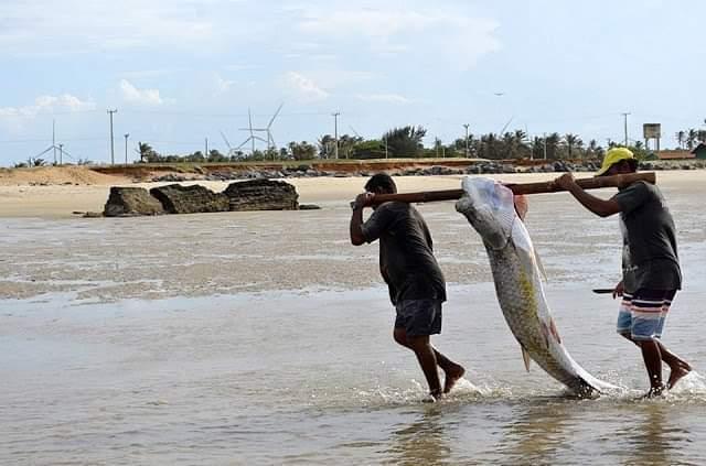 Pesca do Camurupim no Litoral do Piauí rende trabalho científico e livro