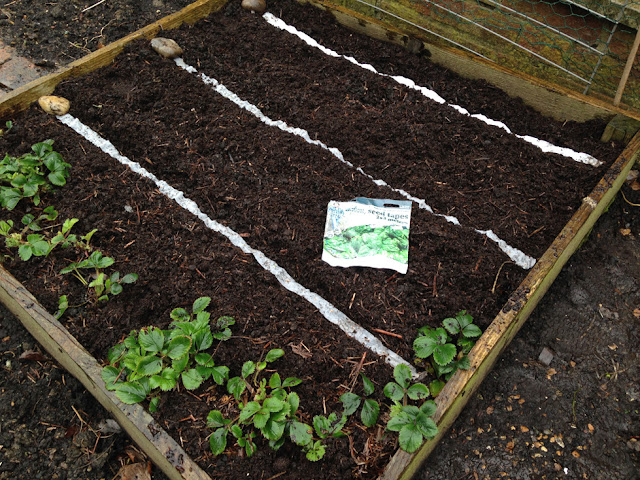 Urban Veg Patch: Planting out Mr Fothergill Get Growing seed tapes