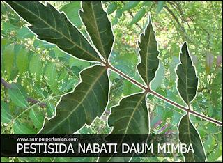 PESTISIDA NABATI dari daun Mimba (Pengendalian Penggerek dan walangsangit)