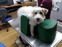 limpeza de cães com paralisia