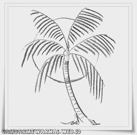 Belajar Menggambar Pohon Kelapa Mewarnai Gambar