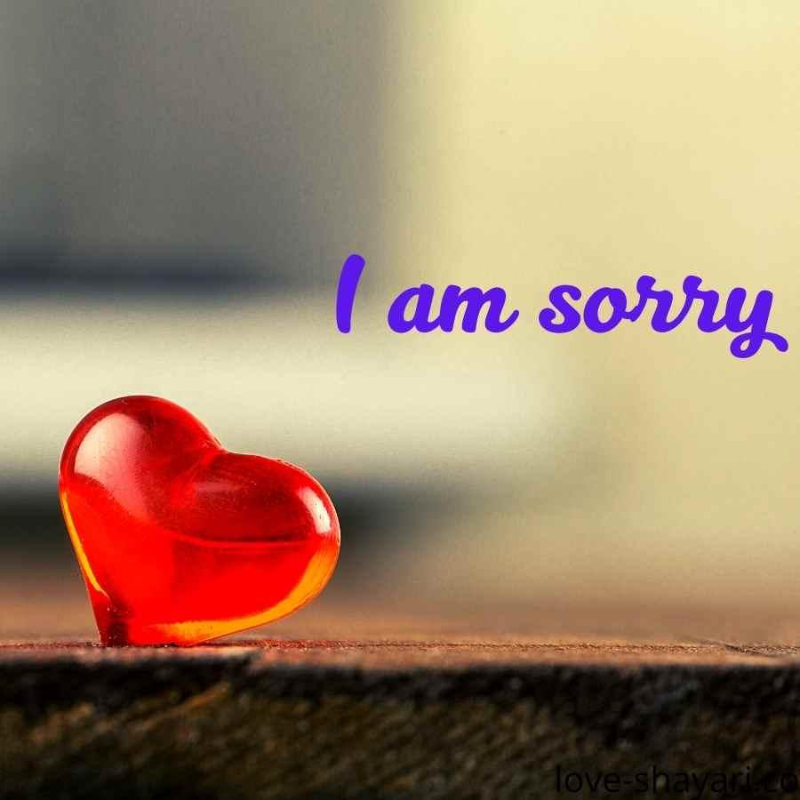 i am sorry teddy bear images