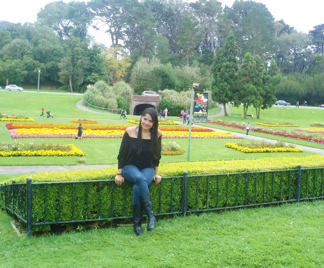 jardim de flores amarelas