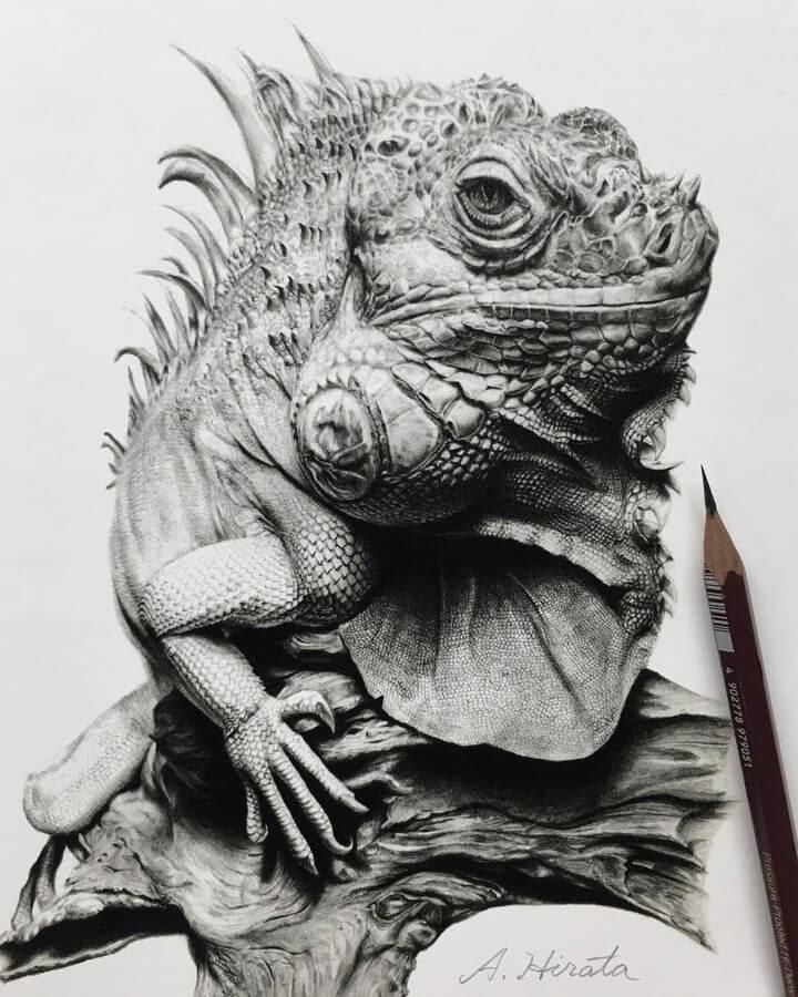 01-Green-iguana-A-Hirata-www-designstack-co