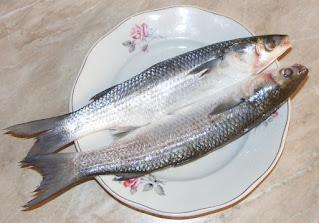 Peste chefal reteta si mod de  preparare retete de casa pescaresti,
