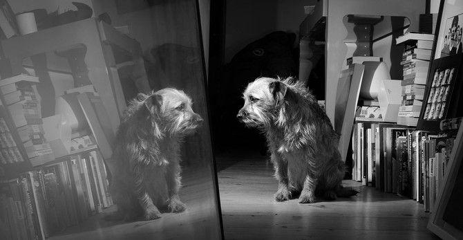 foto de perro blanco y negro