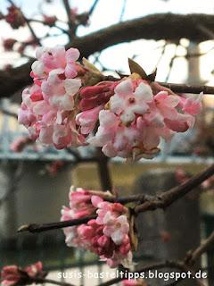 rosa Blüten im Winter Foto von unabhängiger Stampin' Up! Demonstratorin in Coburg