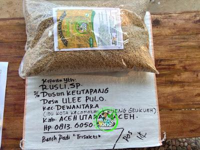Benih pesanan  RUSLI. SP Aceh Utara, Aceh.  (Sebelum Packing)