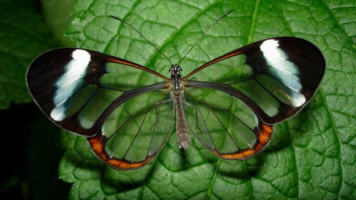 Kebahagiaan Seperti Kupu-kupu, Jika Dikejar Malah Akan Menjauh