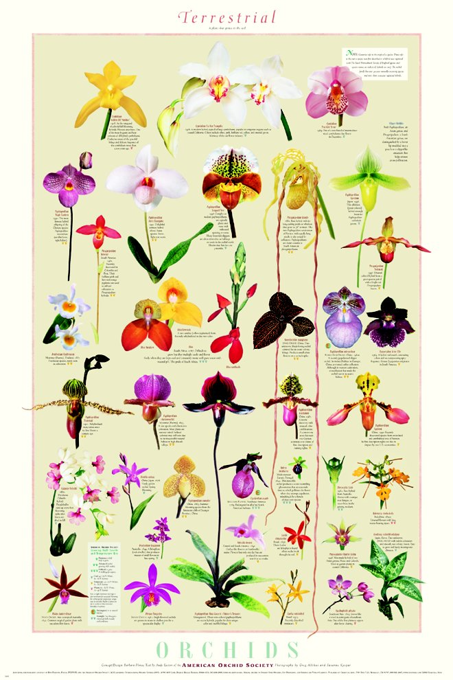 Detailed orchid prints | lifestyle & interiors blog