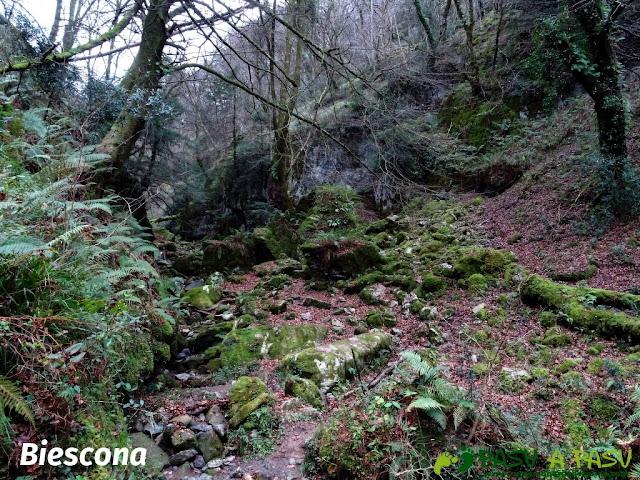 Ruta al Pico Gobia y La Forquita: Hayedo de la Biescona
