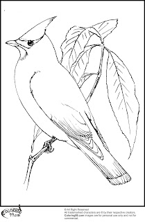 cardinls coloring pages | American Cardinal Coloring Pages | Team colors