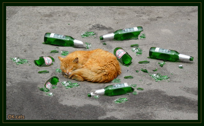 Photoshopped Cat Picture • Super Cool feral cat deeply sleeping on the road among broken beer bottles!