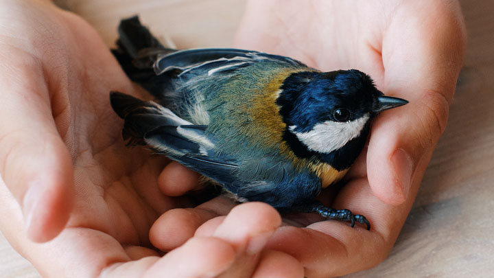 rescue baby birds