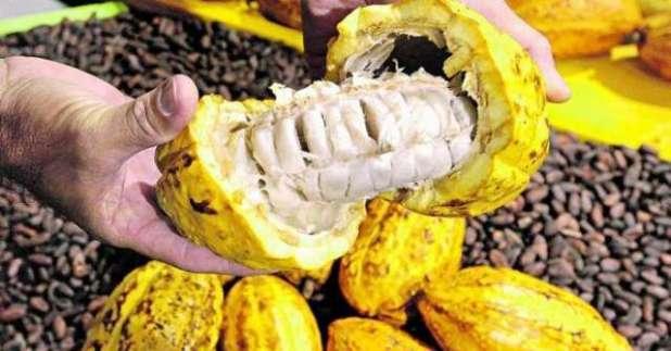 Senadora acredita em aprovação de projeto que beneficia a cacauicultura brasileira