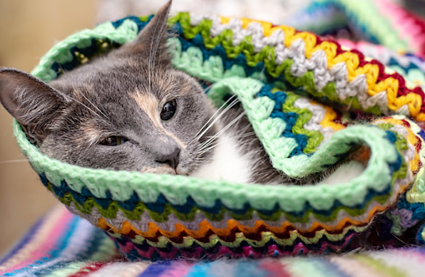 How do I know if my cat has a cold?