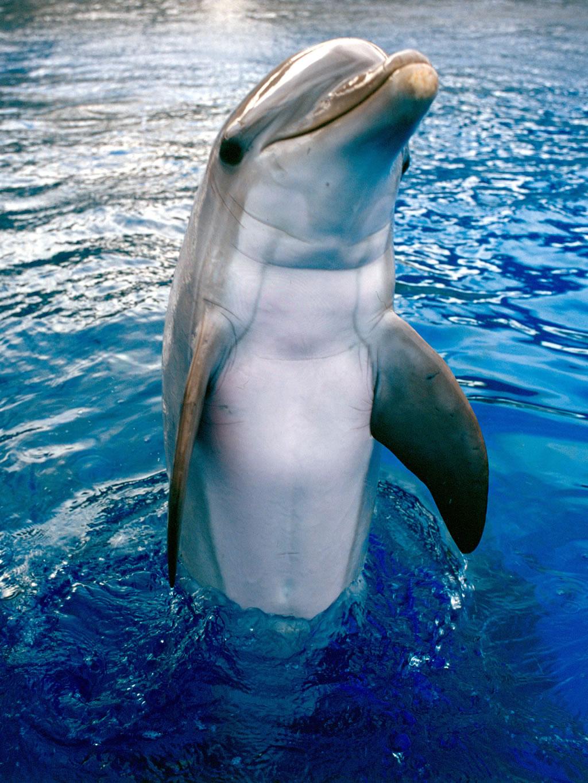 Fotografias De Stock Samiramay: Imágenes Del Mundo Animal: Delfines