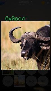 389 фото в поле пасется буйвол 7 уровень
