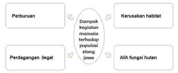 Konservasi Elang Jawa